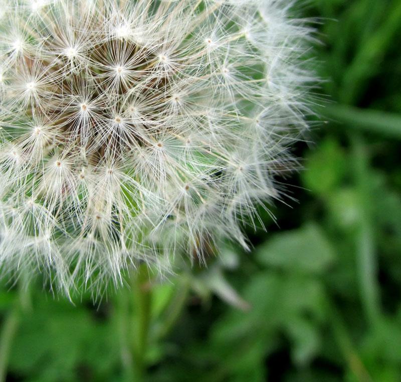 Ease Your Seasonal Allergy Symptoms