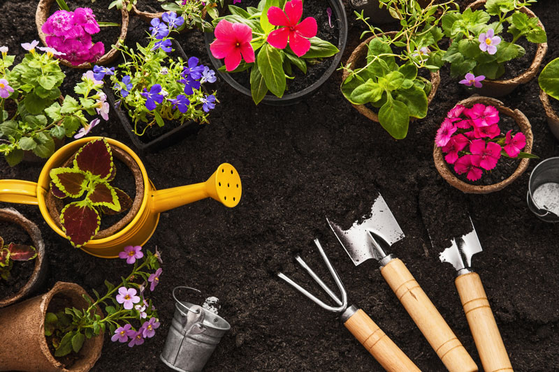 Springtime Gardening Tips to Keep Your Yard Looking its Best
