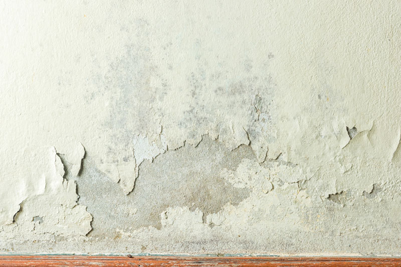 Keep Mold to a Minimum in Your Home with These Prevention Tips